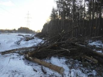 ВКировской области спомощью спутника выявлена незаконная вырубка леса на13 млн руб