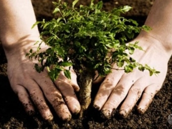 Вмикрорайоне «Заря» разобьют сквер «Именные деревья»