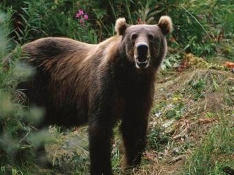 Суд вСочи постановил изъять увладельца ресторана двух медведей, страдающих алкоголизмом