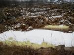 ВКалининграде экологи бьют тревогу