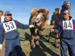 ВРоссии вывели «морозную» породу верблюдов