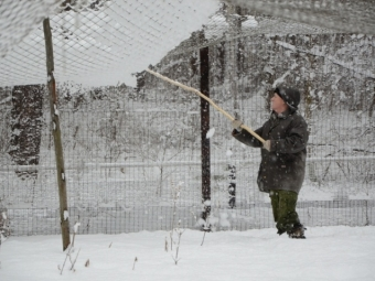 Обильный снегопад вОкском заповеднике стал причиной разрушений вжуравлином питомнике
