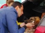 Более 300 собак изсочинского приюта нашли хозяев вРоссии изарубежом