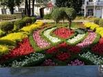 ВСтаврополе в2015 году высадят более 4 тысяч кустов роз