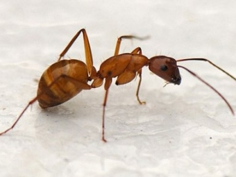 Отодиночества муравьи умирают— Ученые выяснили