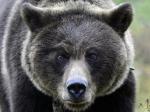 Норильский машинист, сбивший медведя, уволен— Прокуратура