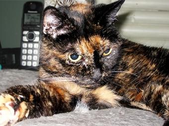 ВКнигу рекордов Гиннесса внесли 26-летнюю кошку