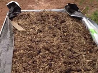 Новосибирский фермер взнак протеста высыпал телегу навоза перед отделением Сбербанка