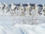Десантно-штурмовую бригаду ВДВ подняли потревоге вВолгоградской области