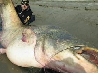 ВИталии рыбаки поймали 127-килограммового сома
