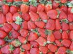 Греция проситРФ отменить запрет напоставки апельсинов, клубники иперсиков