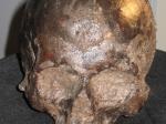 Вчерепе доисторического человека нашли отлично сохранившийся мозг