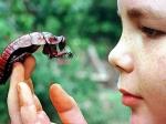 Ученые научились управлять живыми тараканами спомощью компьютера