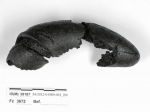 Самый старый вмире крендель нашли вБаварии