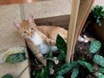 Пропавший в2013 году кот путешествовал поСША— LATimes