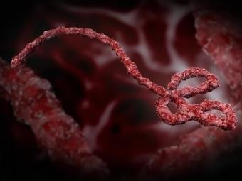 Испытания двух вакцин против вируса Эбола показали, что они безопасны для людей