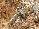 ВКитае зоологи нашли «волшебного кролика»