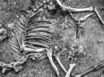 ВАвстрии найден скелет «боевого верблюда» XVII века