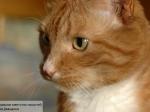 Котенок добрался изЕгипта вБританию за17 дней