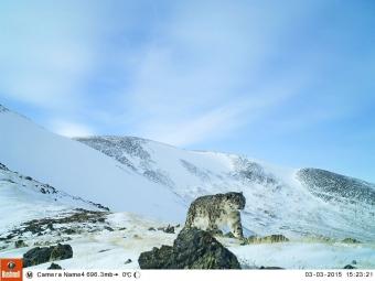 Внациональном парке «Сайлюгемский» наАлтае ученые получили первые снимки ирбиса