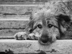 Фонд «Большие сердца» предложили новую программу по решению проблемы с бездомными собаками