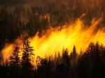ВБурятии площадь лесных пожаров поэтапно снижается