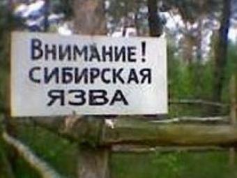Трое жителей Саратовской области заболели сибирской язвой