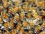 Мужчина едва непогиб отукусов свыше тысячи пчел вСША