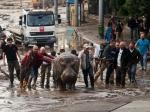 В Тбилиси погибли более 300 обитателей зоопарка из-за сильнейшего ливня