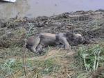 Погибли 4 человека, иззоопарка разбежались хищники— Ливень вТбилиси