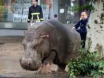 Крокодил, бегемот икабан выжили, большинство львов погибло— Тбилисский зоопарк