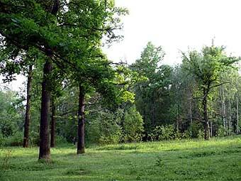 Подмосковные леса продаются за бесценок
