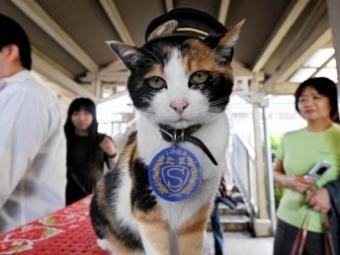 ВЯпонии скончалась кошка, служившая начальником вокзала