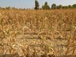 ВВолгоградской области ввели режимЧС из-за почвенной засухи
