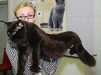 На голову ростовчанину упал 12-килограммовый кот