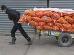 Житель Кемеровской области украл десять килограммов мандаринов