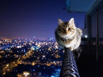 Немецкая кошка заперла своих хозяев на балконе в мороз