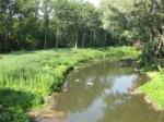 В Рязани ведутся работы по расчистке береговой полосы водоемов