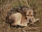 Безнадзорные собаки стали реже кусать пермяков, а домашние - чаще