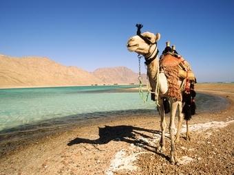 Почему Северяне любят проводить отпуск в Египте