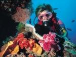 Оценить красоту подводного мира