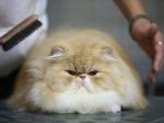 Более 100 бездомных кошек и собак раздадут в Томске