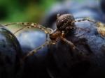 Британские дома страдают от нашествия пауков