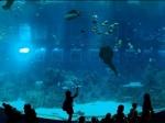 Китайский аквариум стал пятикратным рекордсменом Книги рекордов Гиннесса