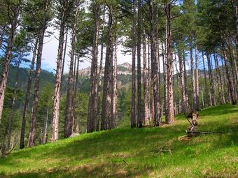 Yves Rocher поможет восстановить леса Алтая