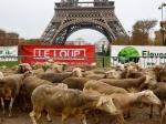 Фермеры во Франции пригнали более двух сотен овец к Эйфелевой башне