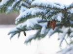 Аномальные морозы вАлтайском крае простоят доконца января