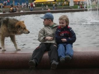 Встолице предлагают создать зоополицию