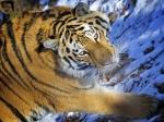 ВМоскве оперативники обнаружили вдвух ресторанах мясо ишкуры диких животных, занесенных вКрасную книгу