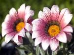 Живые цветы: отличный подарок к любому празднику
